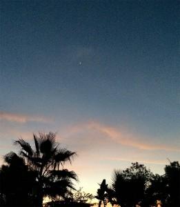Venus-Palmenstrand